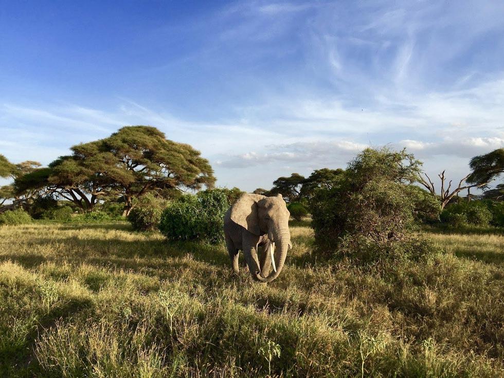 Не просто природе, а настоящей, африканской саванне