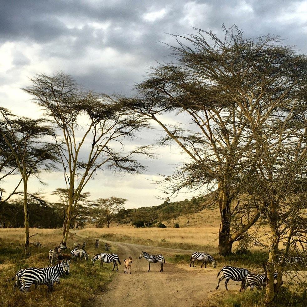 Национальный парк Масаи Мара - потрясающее место