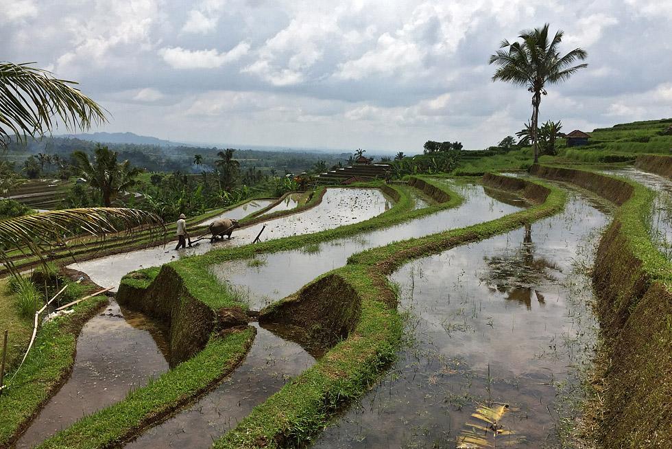 Bali_2016 286