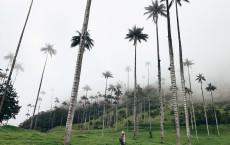 Девичник в Колумбии