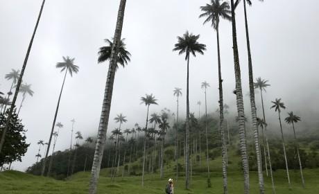 Путешествие по Колумбии. Что посмотреть в Колумбии? Бюджет.